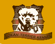 Lokan Terriers